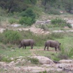 200 Krügerpark Afrika 2011