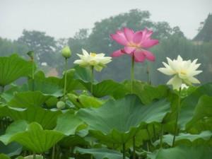 Peking 2010 497